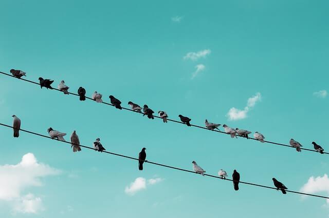 birds appeal