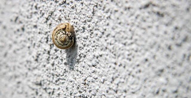 adjustments snail
