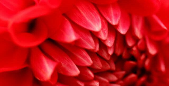 red limitation