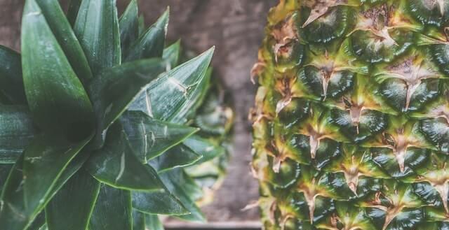 pupillage pineapple